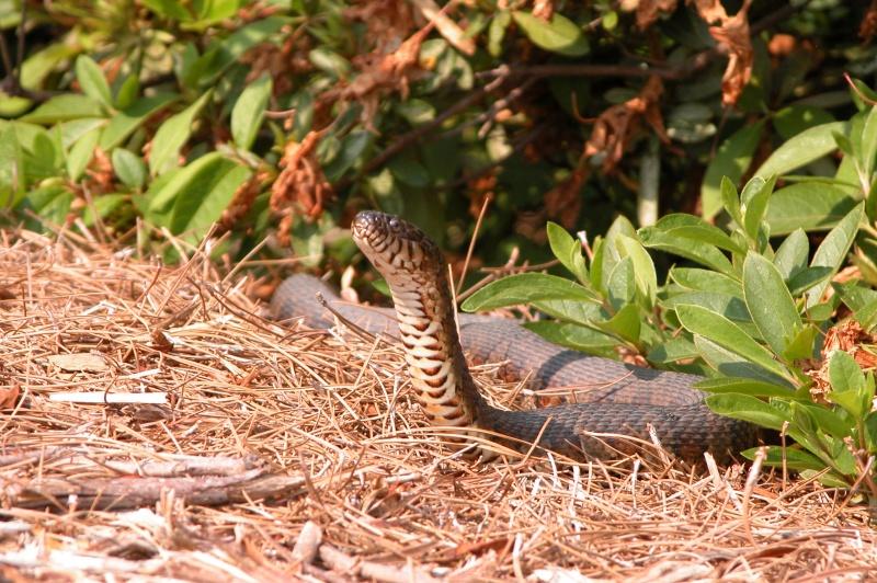 Snakes Are Often Skinned Alive