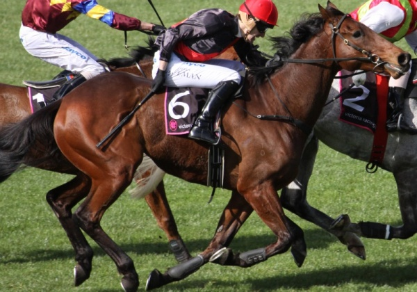 Urge These Companies to Stop Sponsoring the Melbourne Cup