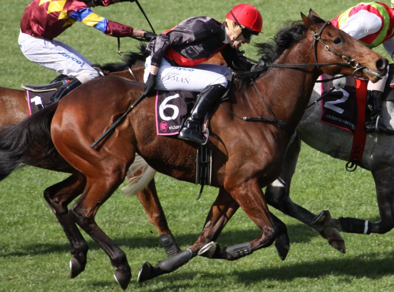 Horses Used for Racing Suffer