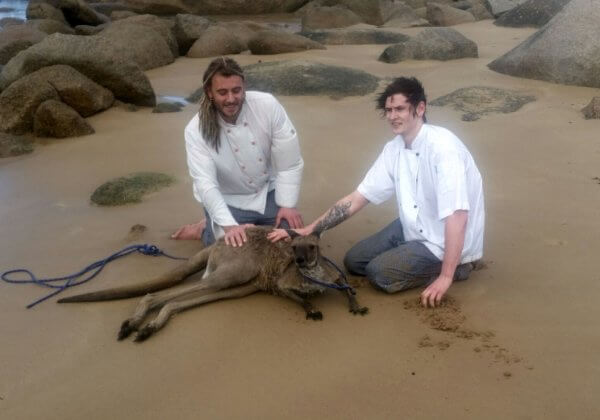 Fully Clothed Chefs Leap Into Ocean to Rescue Drowning Kangaroo