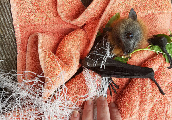 Backyard Netting Is Lethal for Native Animals – Here's How You Can Help!