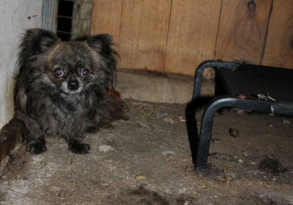 Puppy Farms: The Hidden Suffering Behind the Marketing