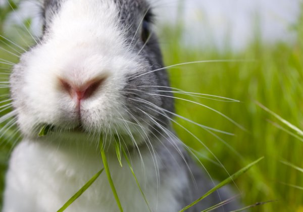 Suave Goes Cruelty-Free, Joins 'Beauty Without Bunnies' List