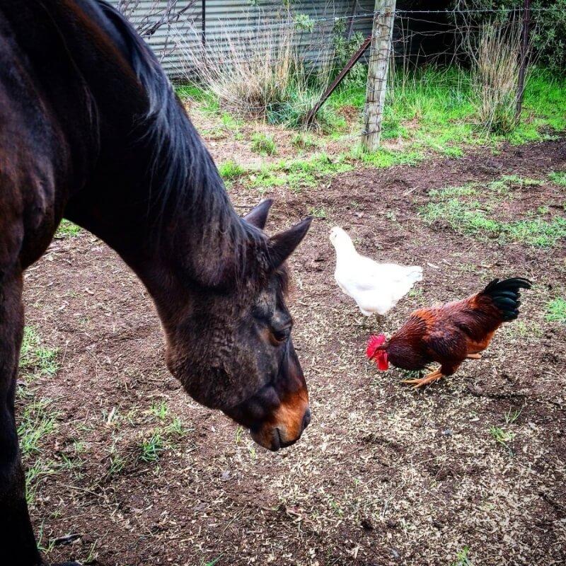 A horse checks out Douglas and Gerry.
