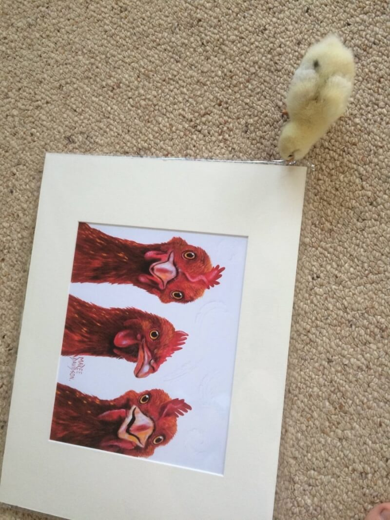 Chick looking at chicken painting