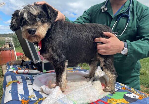 NSW Puppy Farm Raid: 79 Dogs Seized