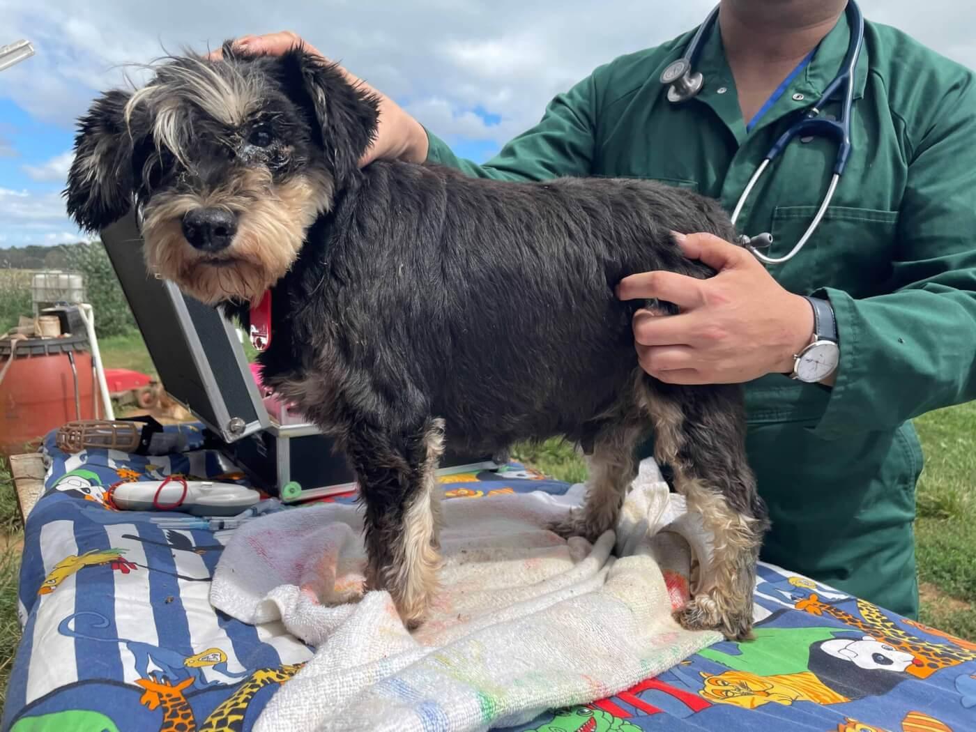A dog seized in the RSPCA raid.