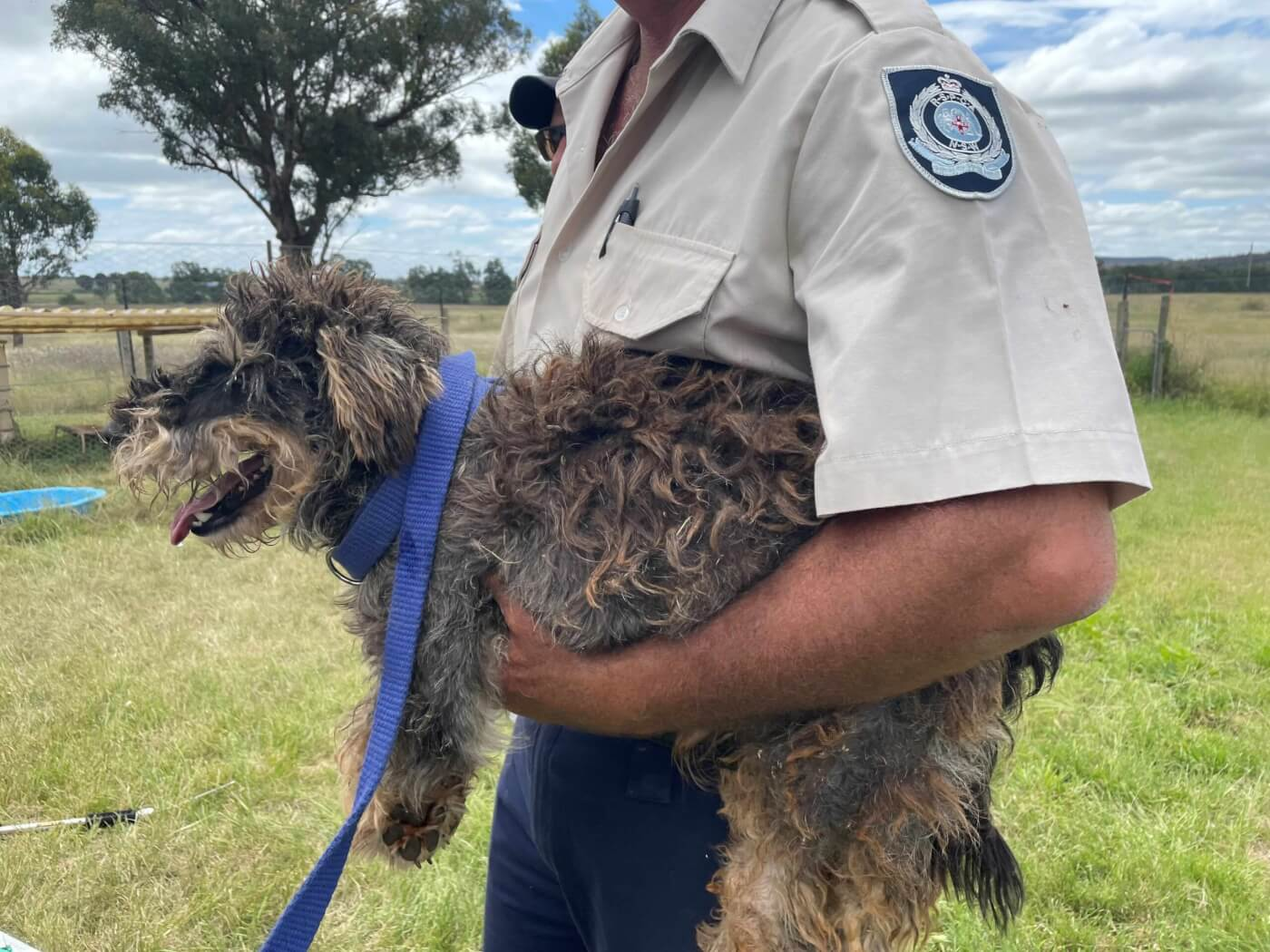A dog seized by the RSPCA/