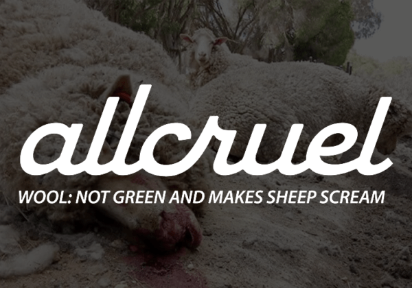 Allbirds' Misleading Claims About Wool – Take Action for Sheep