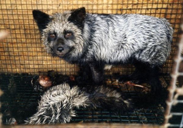 Ask Designer Annah Stretton to Dump Fur