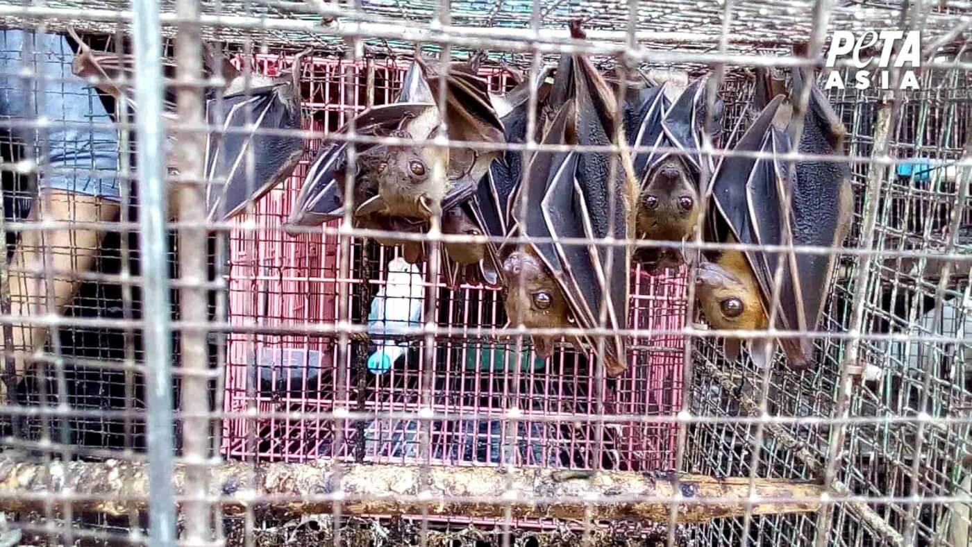 Bats in a cage at a live animal market.