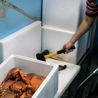 A photo of a fish being killed at a live sea food store in Australia with a hammer to the head.