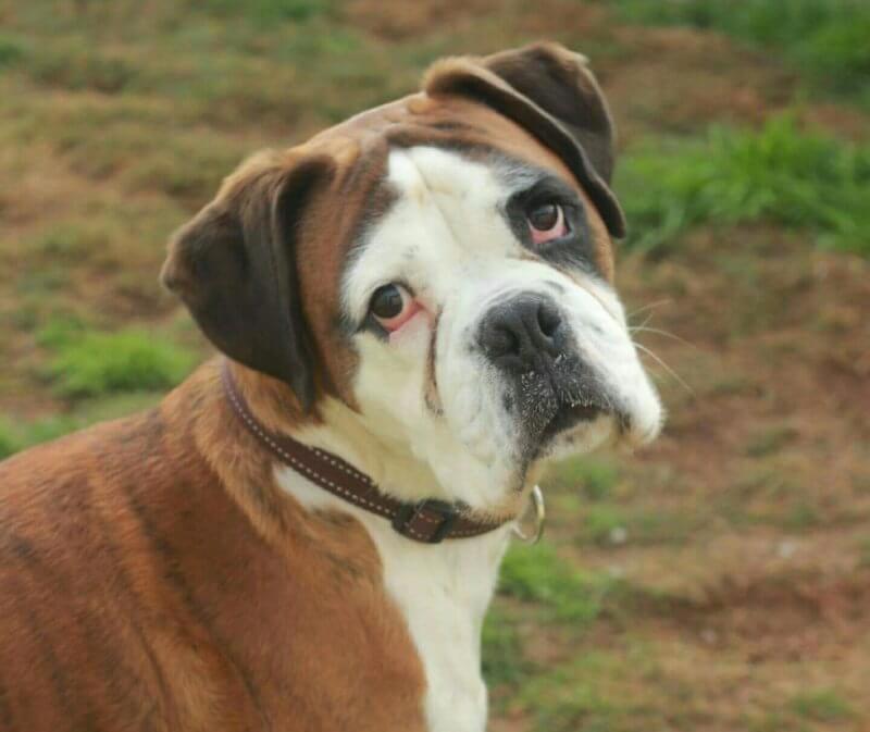 bernard- adopted dog