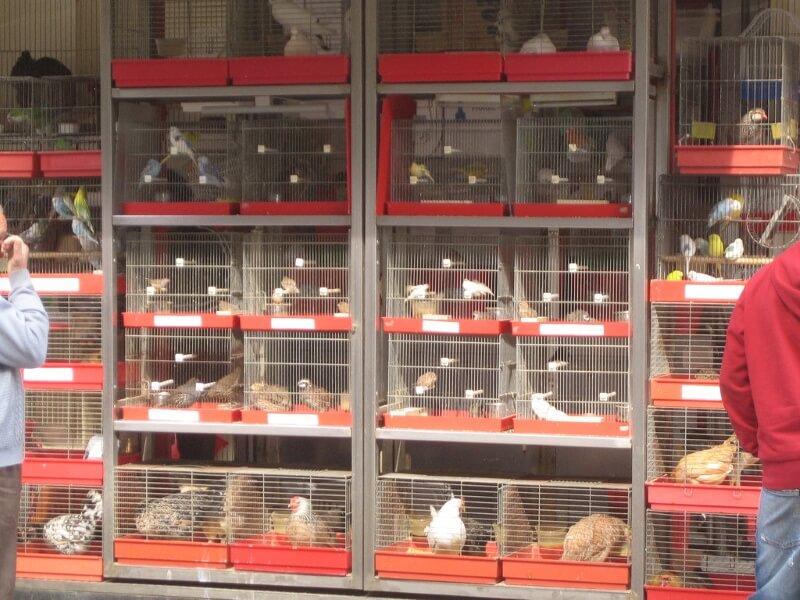 Birds in pet shop