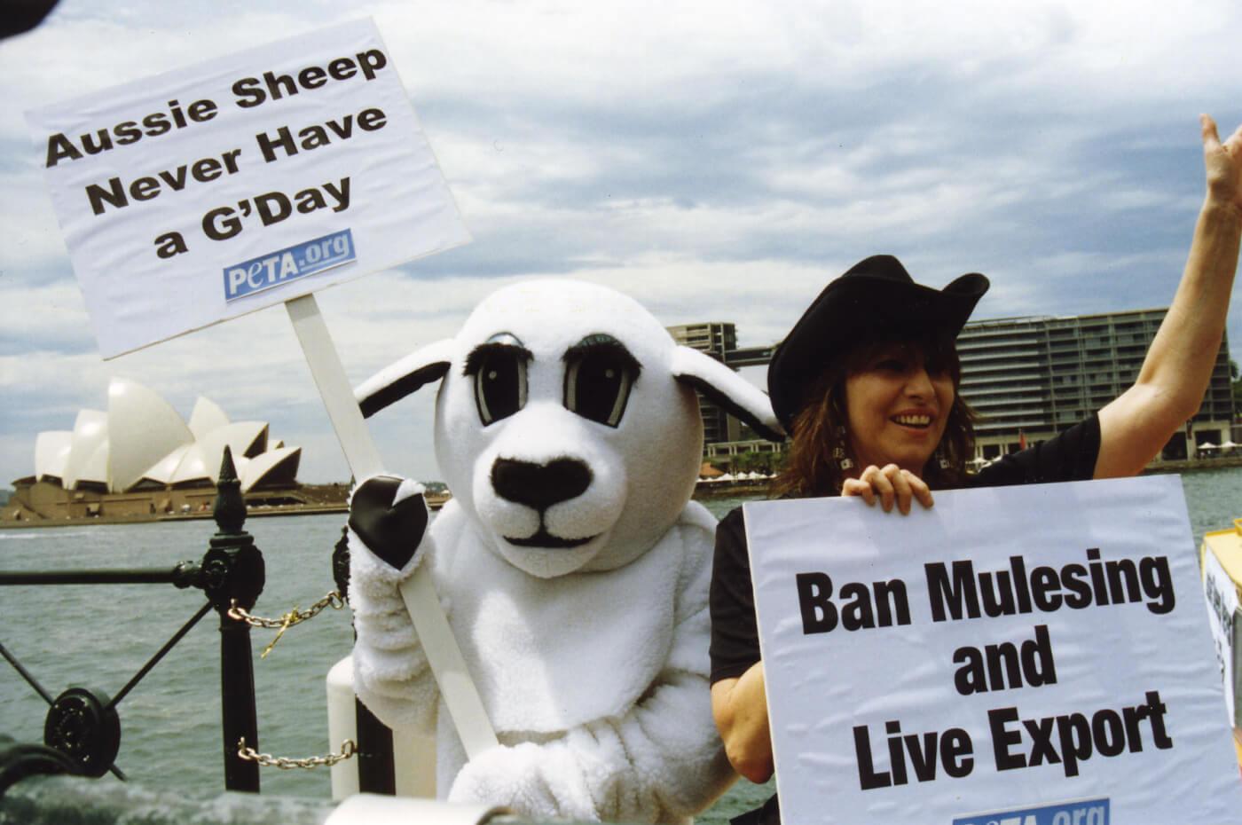 Chrissie Hynde in Sydney protesting mulesing.