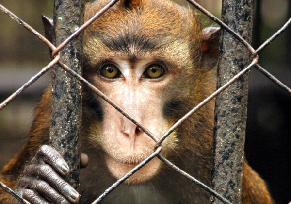 Animals Aren't 'Freight': 10 Ways You Can Help Them