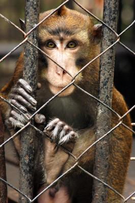 Intelligent Animals Suffer in Zoos