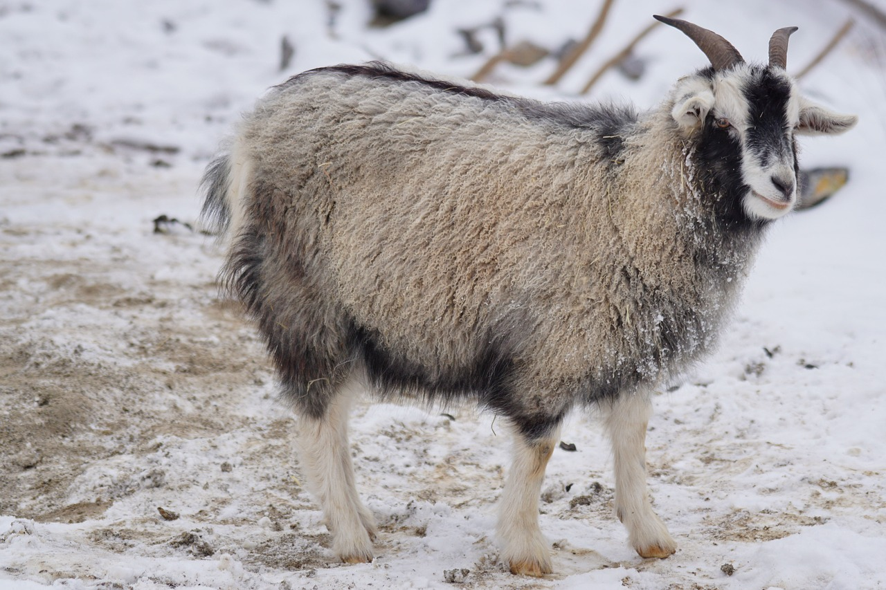Victory! Two Huge Aussie Fashion Brands Ban Cashmere