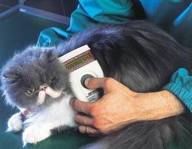 Cat microchip