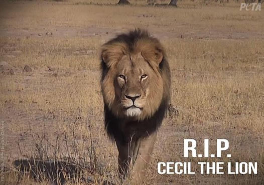 Cecil's Death Highlights Cowardice of Hunting