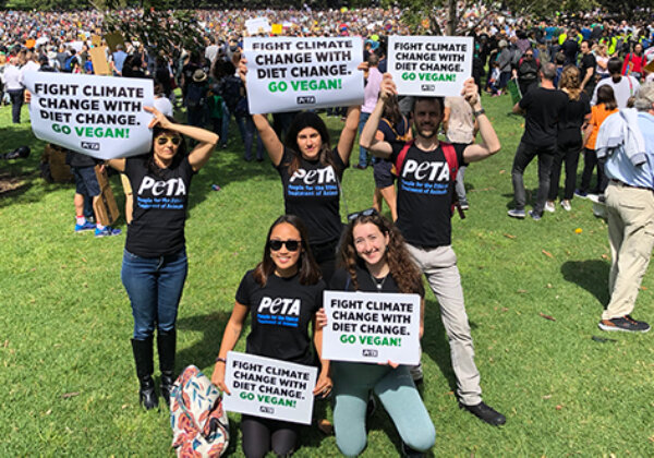 Work at PETA: Campaigns and Communications Manager