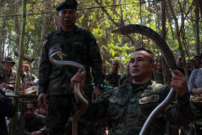 Despite Pandemic, Military Trip to Thailand Scheduled for Drill Involving Bloodlust, Animal Killing