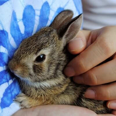 Cute bunny being held