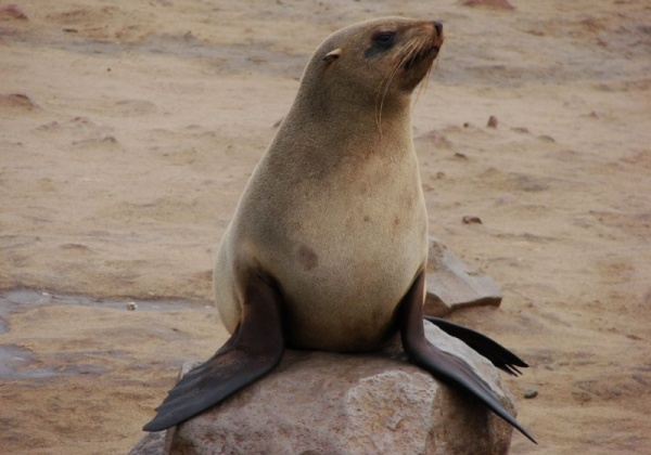 Stop the Slaughter of the Seals of Nam