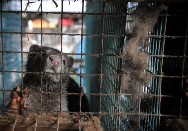 Demand That Fashion Label Vicky Mar Drop Fur