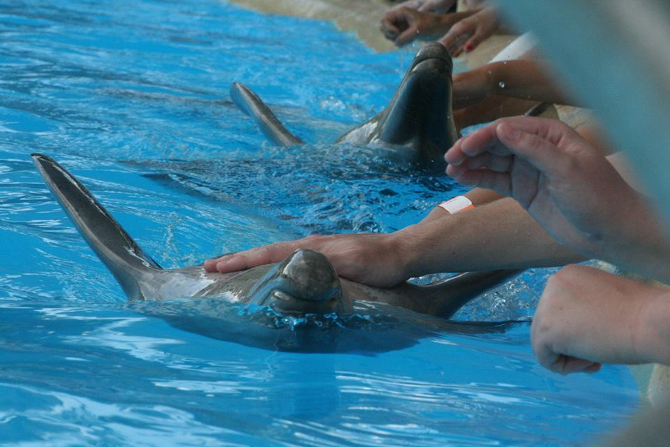 Dolphin petting at Dolphin Marine Magic (now named Dolphin Marine Conservation Park)