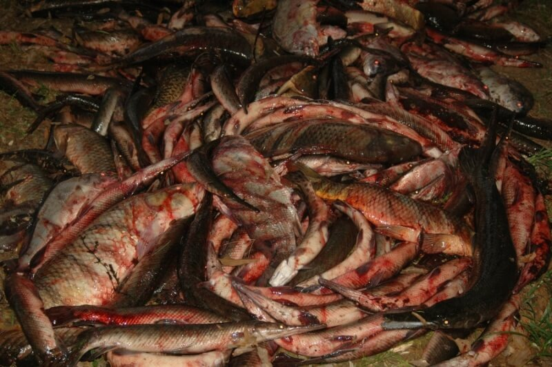 Bloody Dead Fish