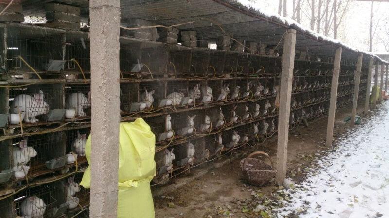 Rabbit Fur Farm China