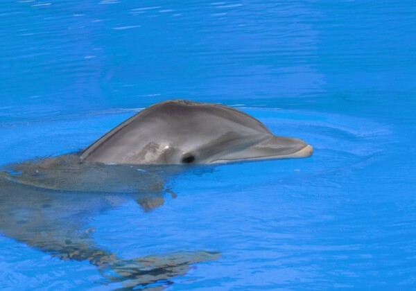 A photo of a dolphin in captivity.
