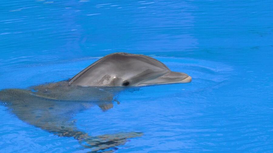 Dolphin Captivity Australia