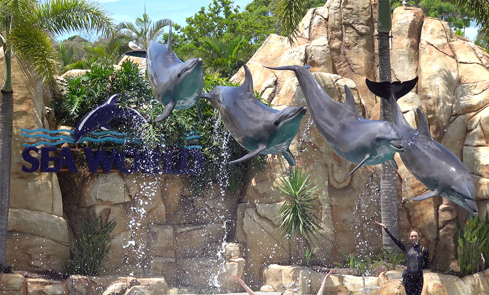 a photo of dolphins at Sea World jumping in unison.