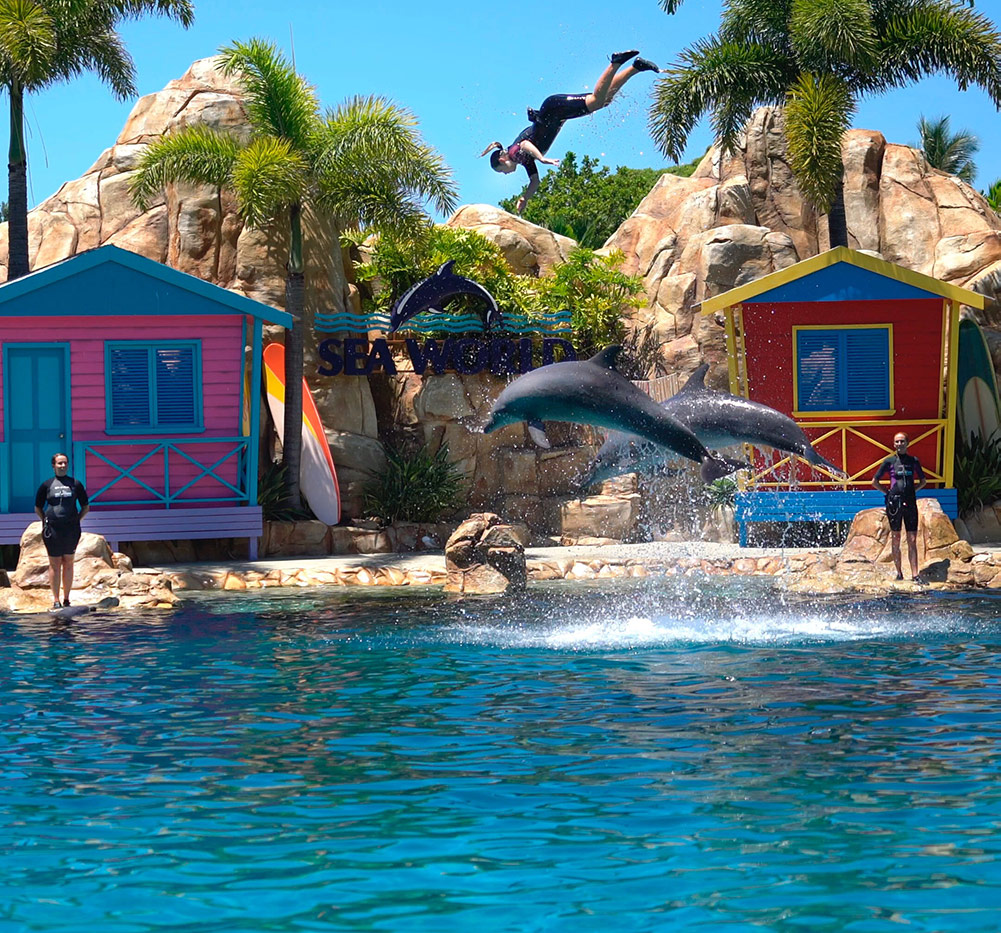 A photo of Sea World's dolphin show.