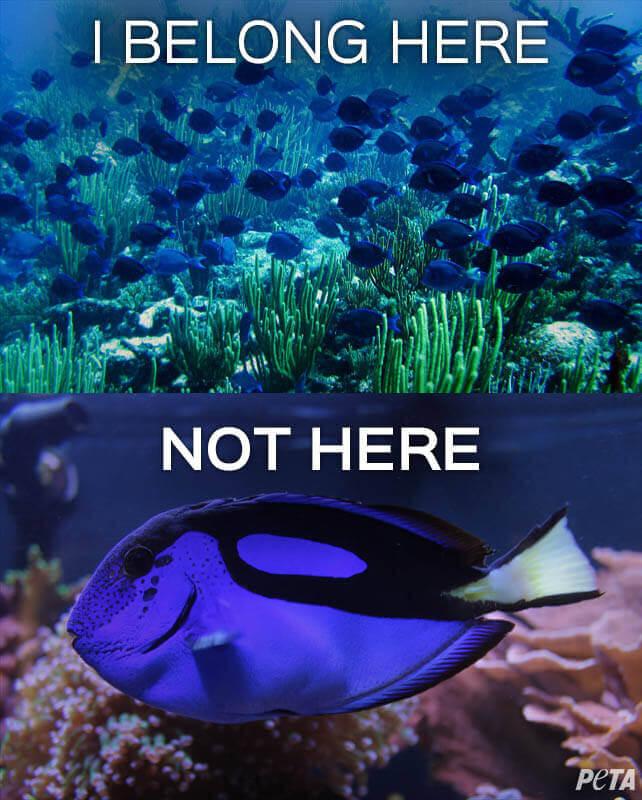 Dory-Belong-Here-Not-Here-PETA
