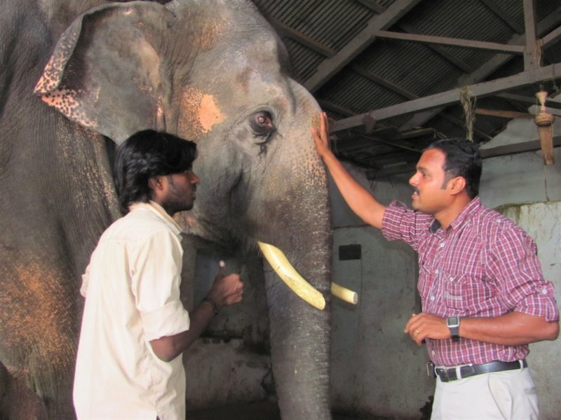 When Sunder was 13 years old, staff members with Animal Rahat (an Indian organisation supported by PETA) persuaded the temple to accept the free veterinary care they offered him.