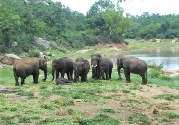 Today, perhaps more than ever, he still enjoys the sanctuary and spends his days foraging freely in the forest, playing in streams and ponds, and relishing the company of other elephants – all things that he'd never had a chance to experience before.