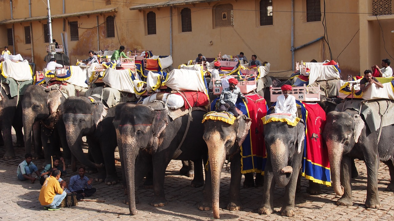 A photo of the elephants used for rides at Amer Fort.