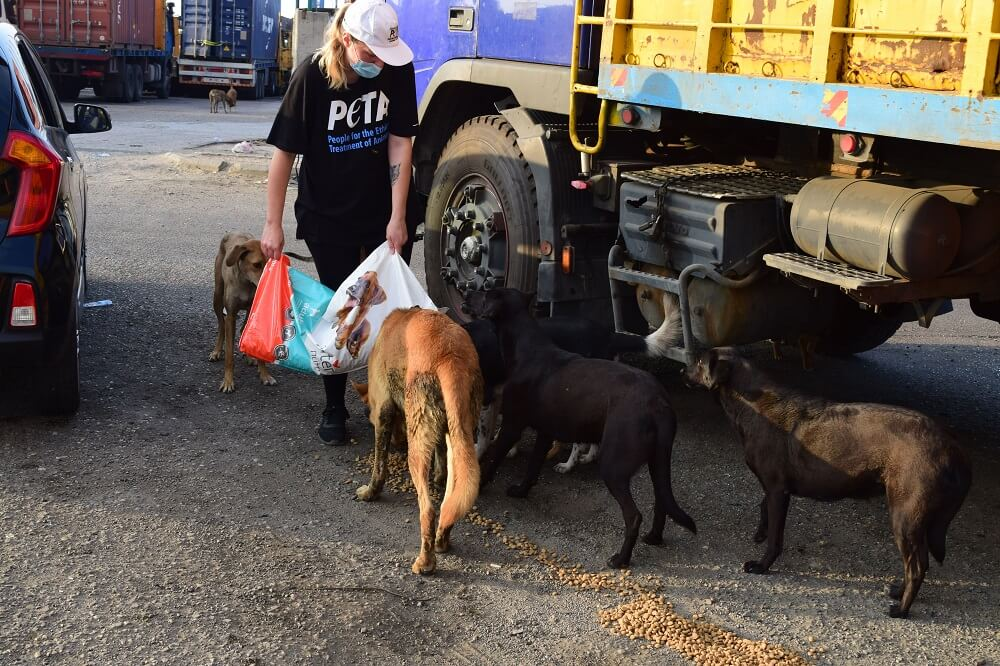 PETA's Global Compassion Fund Supports Rescuing Animals in Beirut