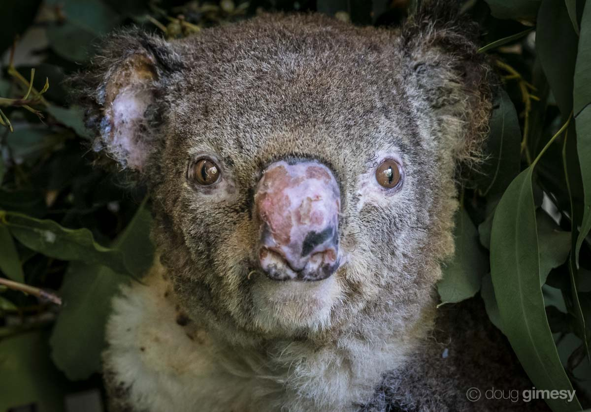 Stories of Hope and Survival From Australia's Bushfires