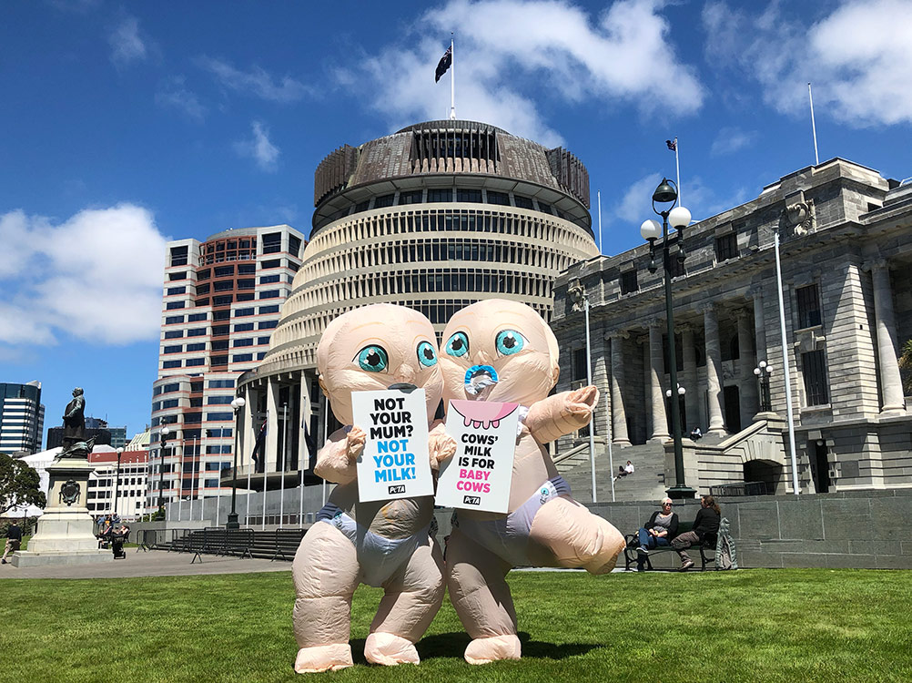 Giant Babies at Parliament House in Wellington, New Zealand.