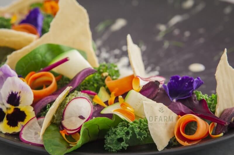 oFarm salad close up