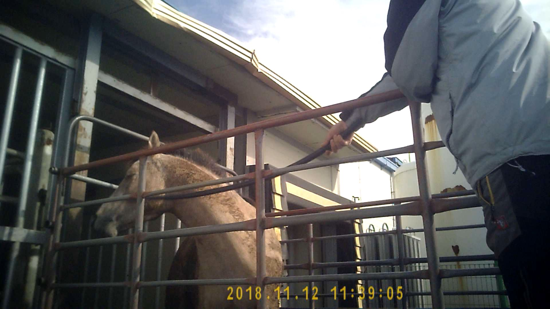 This 3-year-old filly was repeatedly struck in the face during unloading.
