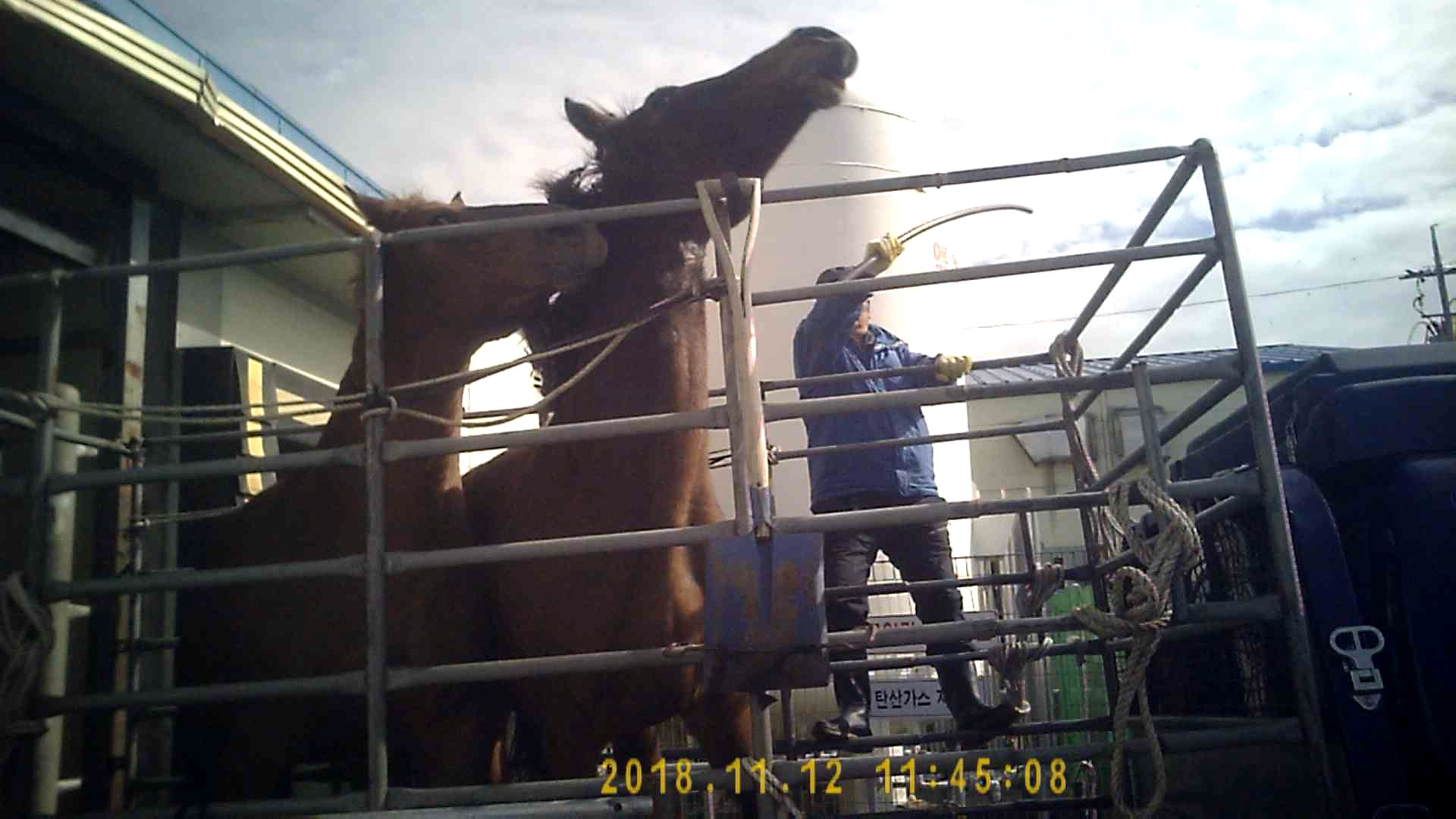 Three men took turns beating these terrified mares for almost three minutes.