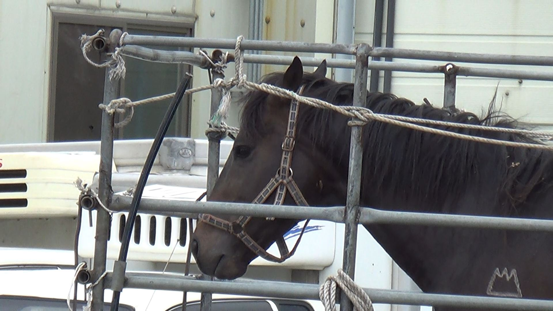 Seungja Yechan stands at the slaughterhouse. To his left is one of the black poles used to strike the horses.