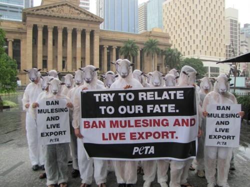 Brisbane mulesing protest