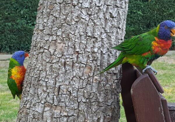 Birds Kept as Companion Animals