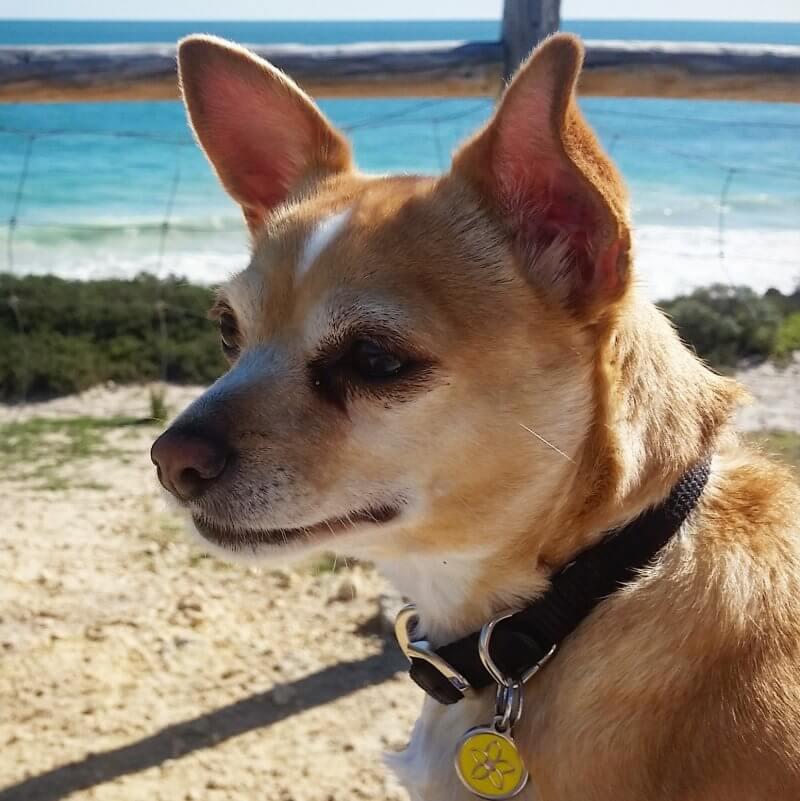 leela adopted dog